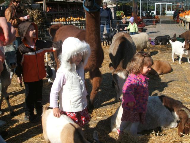 Hire Petting Zoo